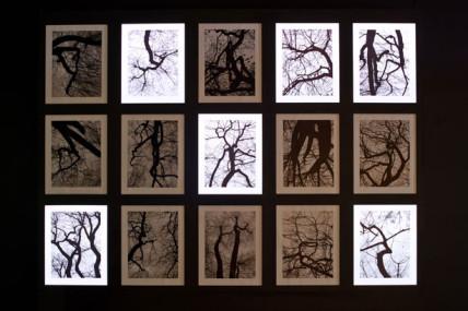 Les esprits de l'arbre