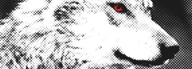 Printemps 2015: des loups et des moutons