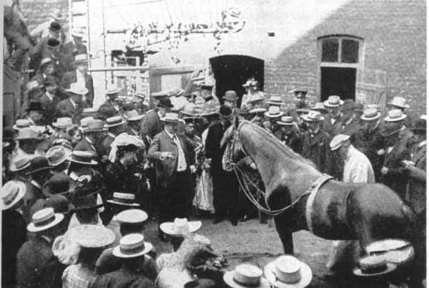 Hans-le-malin, le cheval de Pfungst