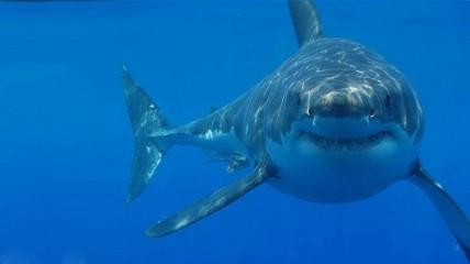 <i>Requin : prédateur ou proie?</i> au Centre des sciences de Montréal dès le 11 avril