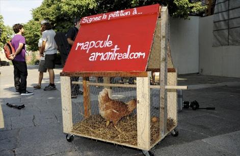 des poules en ville actualit s voir la vie. Black Bedroom Furniture Sets. Home Design Ideas