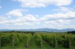La Route des vins Brome-Missisquoi vous reçoit!
