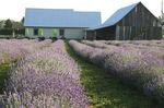 La Provence à portée de main