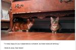 <i>Felines of New York</i> : une parodie efficace