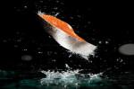 Saumon sauvage: Remonter à cinq