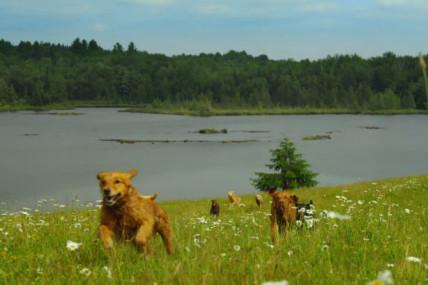 [À voir] Des chiens heureux dans la nature pour le nouveau clip de Philippe B