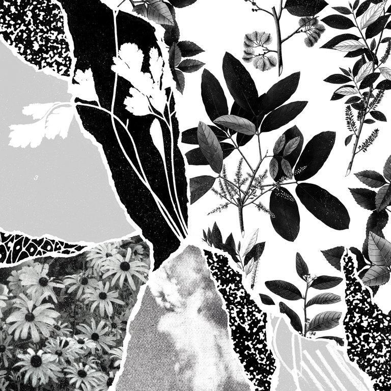 Ponctuation: Mon herbier du monde entier